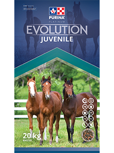 Evolution Juvenile